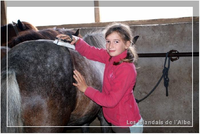 Les enfants soignent les chevaux