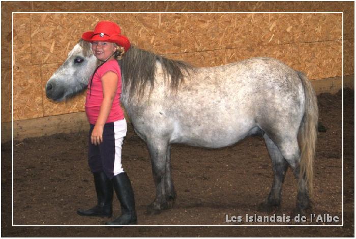 Travail des chevaux en liberté