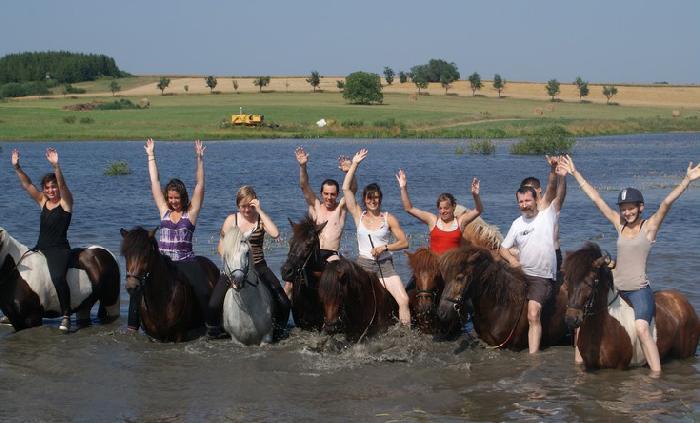 Le groupe de chevaux dans l'eau
